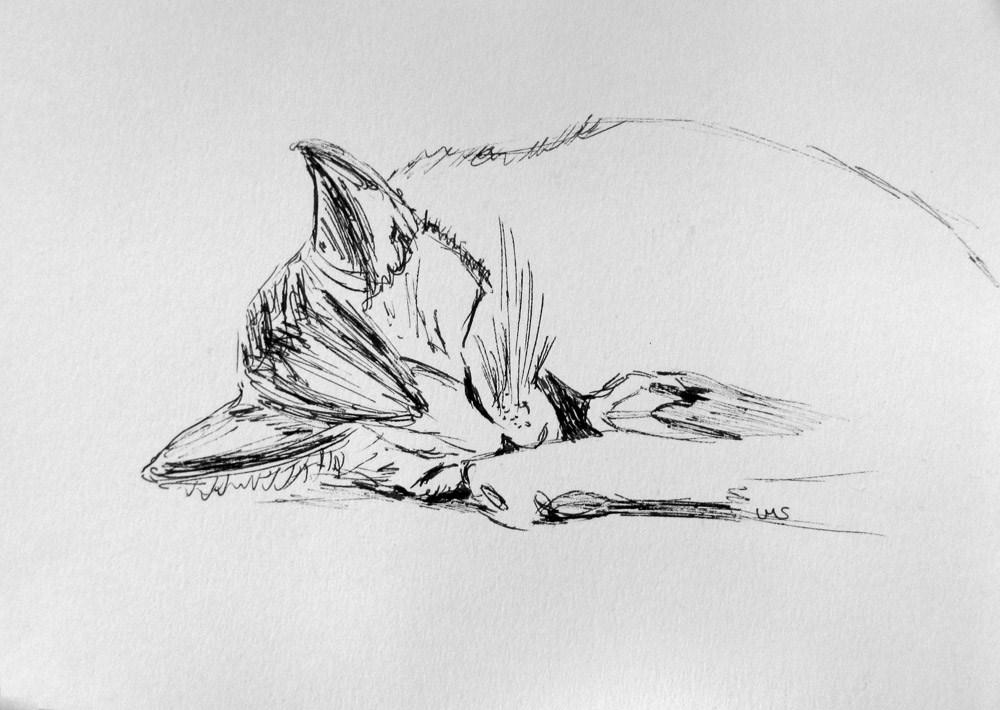 """""""Marrakech Kitty"""" original fine art by Ulrike Miesen-Schuermann"""
