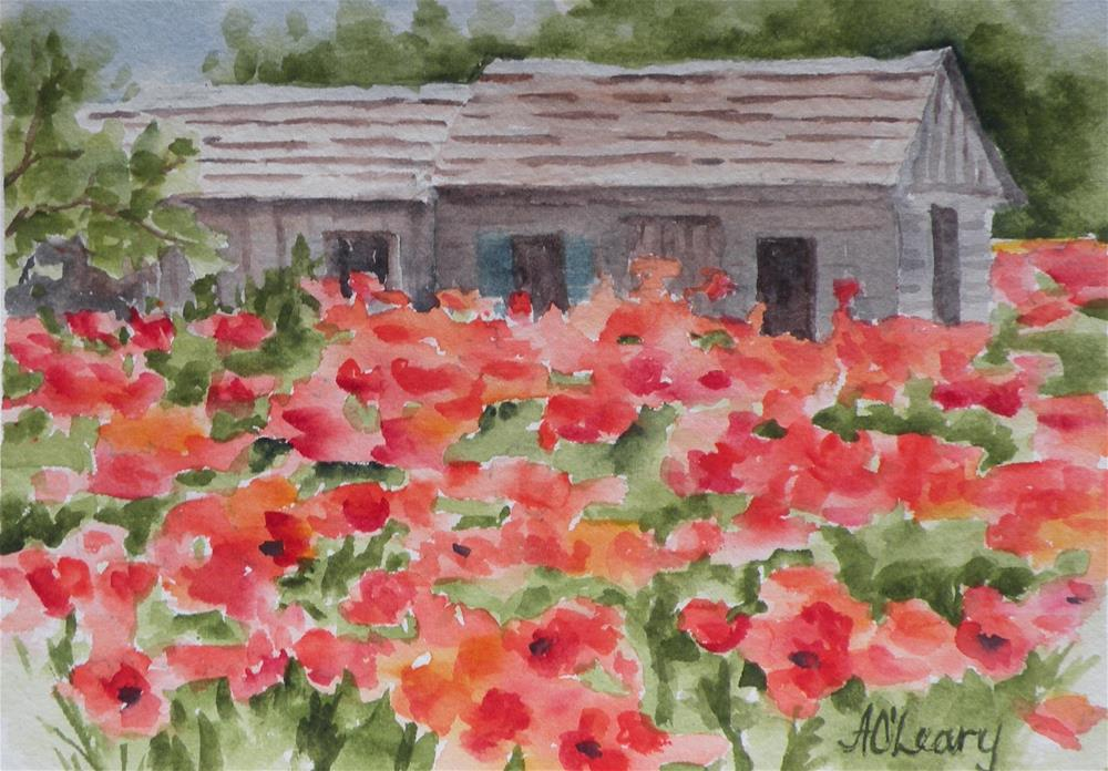 """""""Castroville Poppies"""" original fine art by Alice O'Leary"""