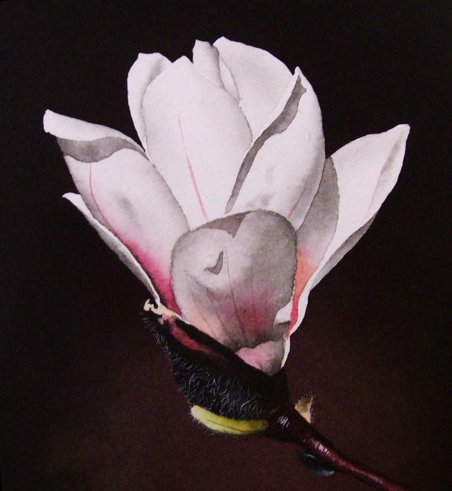 """White Magnolia with Pink Accents"" original fine art by Jacqueline Gnott, TWSA, WHS"