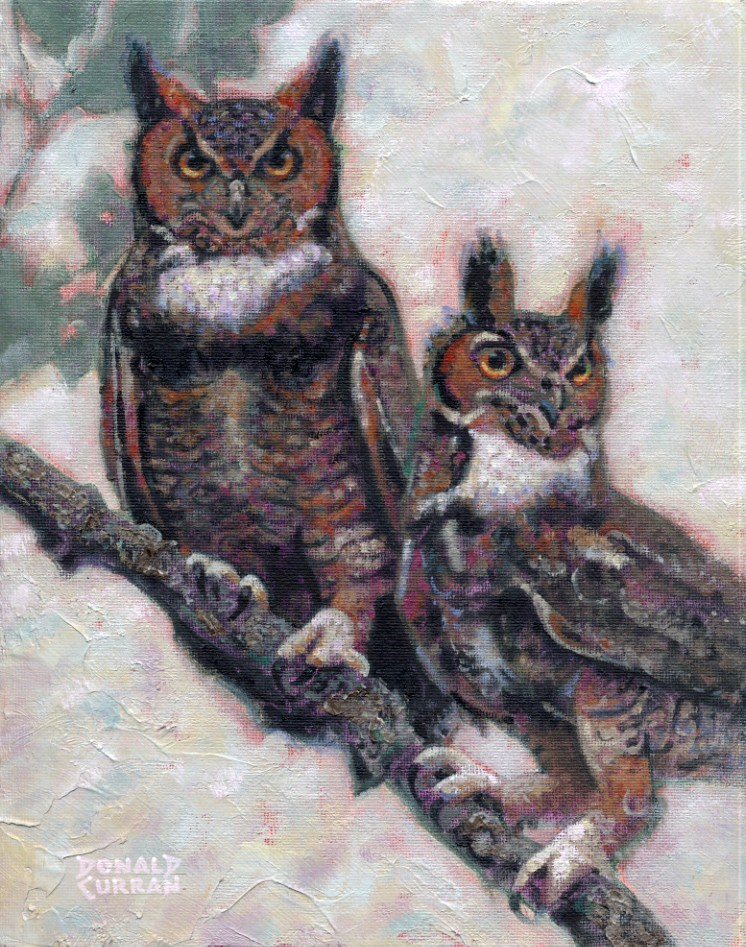 """Wise Old Owls"" original fine art by Donald Curran"