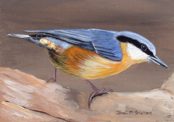 """""""Wood Nuthatch ACEO"""" original fine art by Janet Graham"""