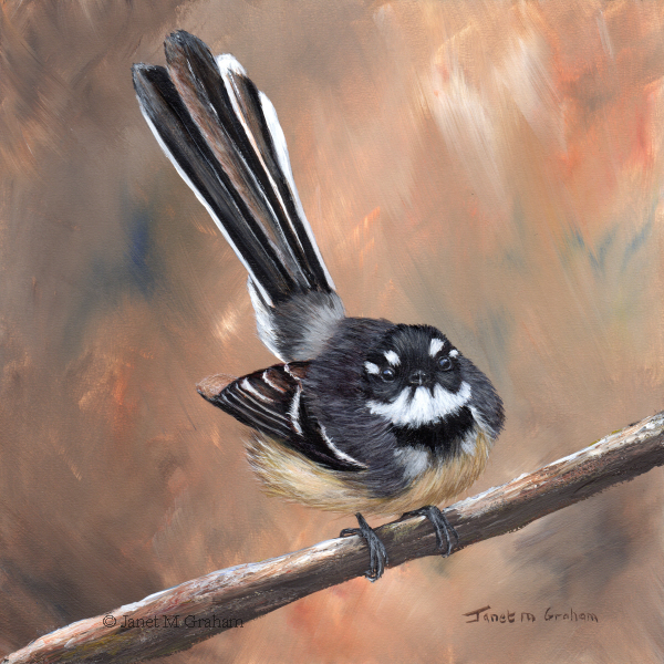 """Grey Fantail"" original fine art by Janet Graham"