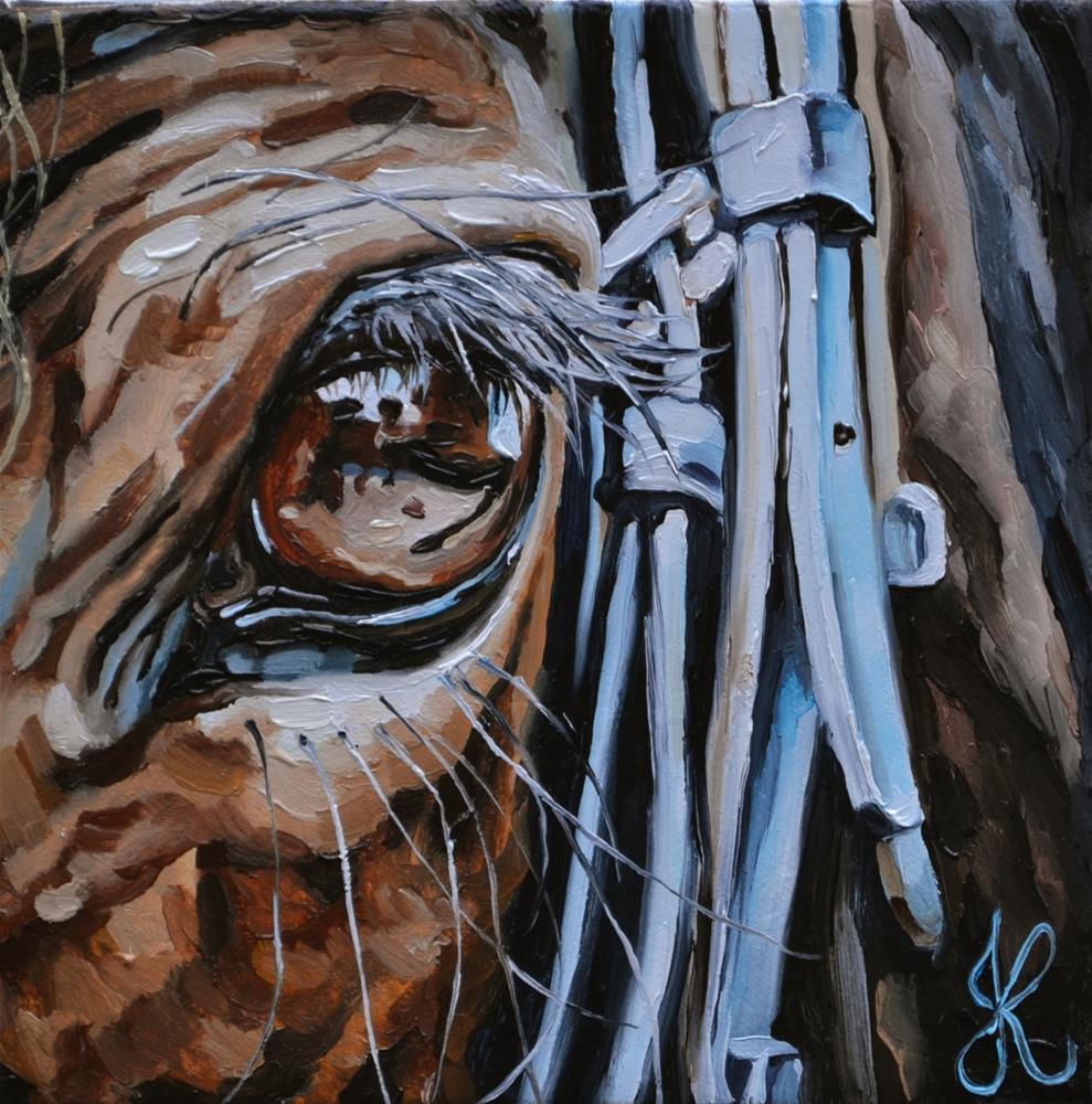"""""""Eye of a Horse"""" original fine art by Jacinthe Rivard"""