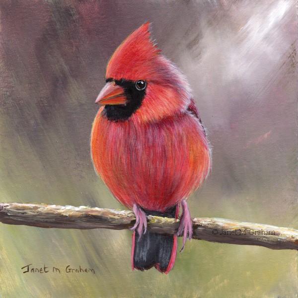 """""""Cardinal No 5"""" original fine art by Janet Graham"""