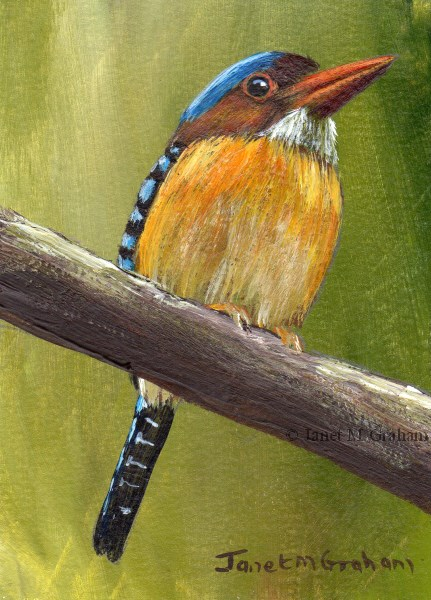 """""""Banded Kingfisher ACEO"""" original fine art by Janet Graham"""