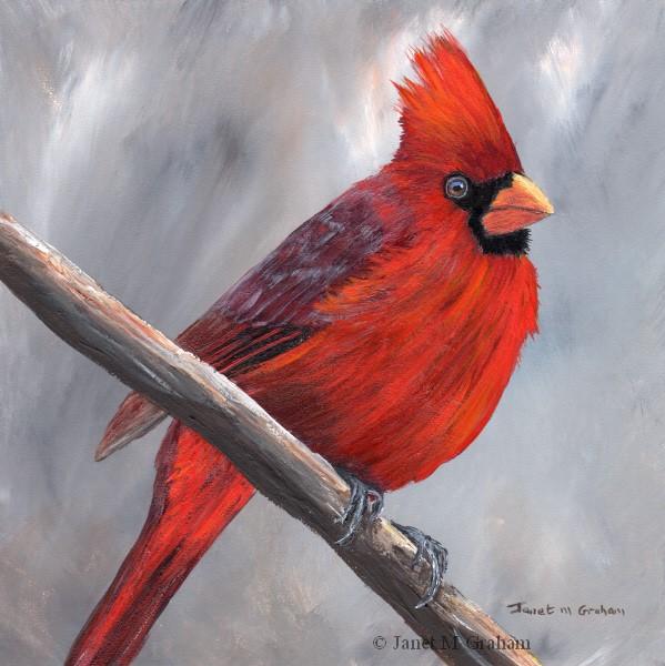 """Northern Cardinal"" original fine art by Janet Graham"
