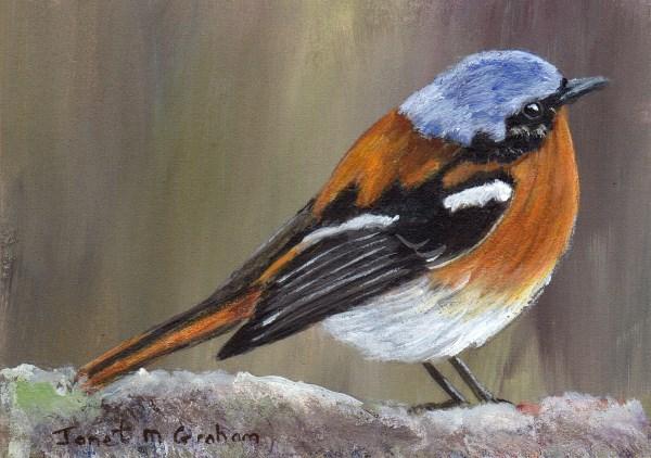 """""""Eversmann's Redstart ACEO"""" original fine art by Janet Graham"""