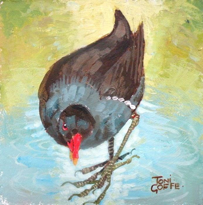 """""""Moorhen"""" original fine art by Toni Goffe"""
