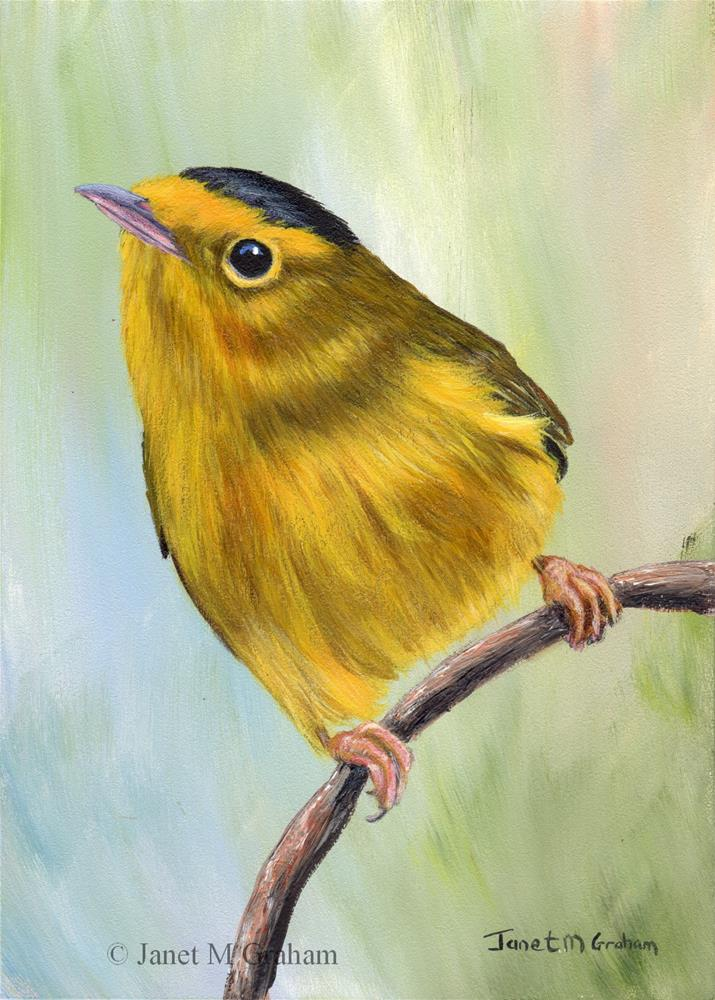 """Wilson's Warbler"" original fine art by Janet Graham"