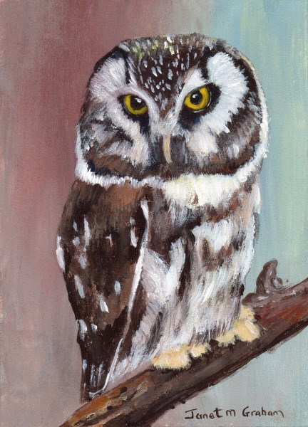 """""""Boreal Owl ACEO"""" original fine art by Janet Graham"""