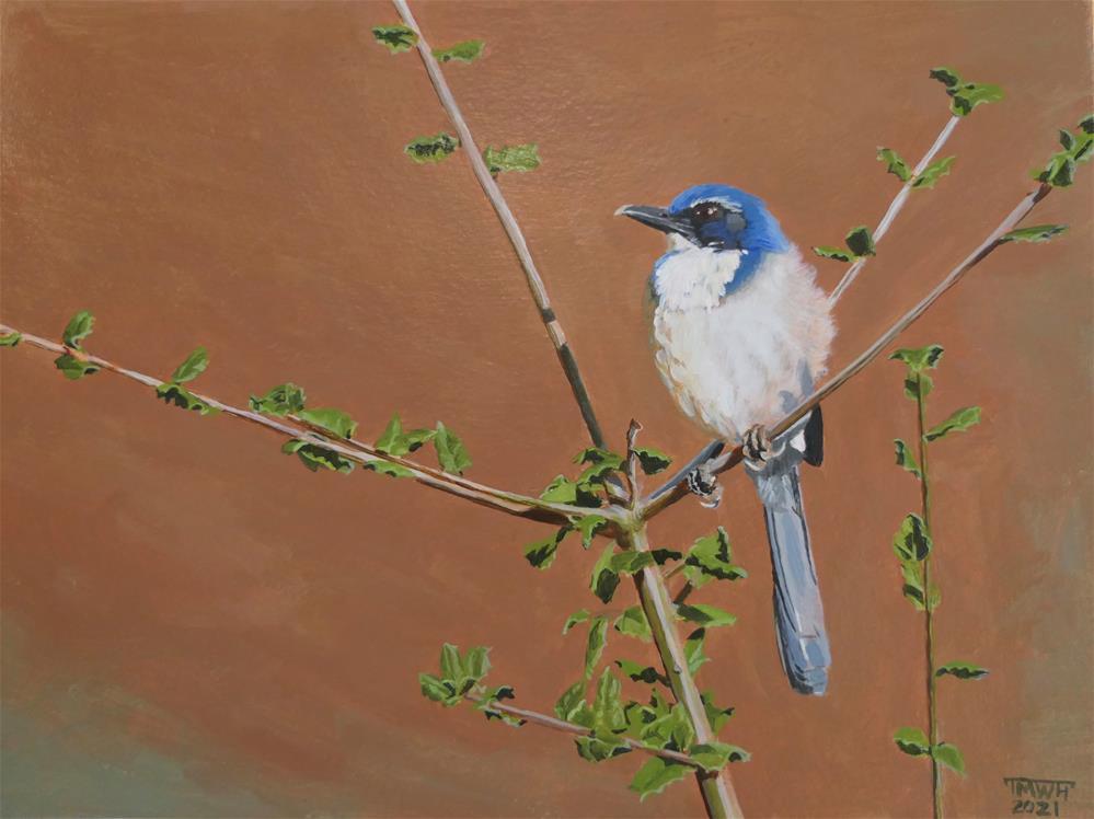 """Scrub Jay in the Garden"" original fine art by Tracy Hurley"