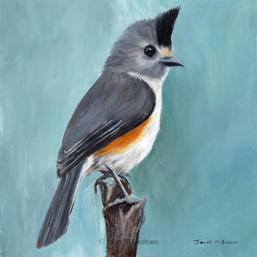"""Black Crested Titmouse"" original fine art by Janet Graham"