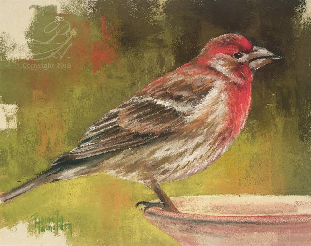 """House Finch"" original fine art by Pamela Hamilton"