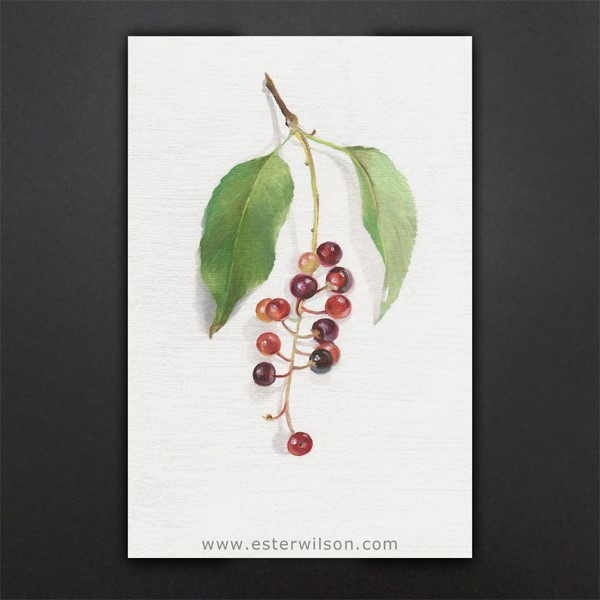 """Spring Berries"" original fine art by Ester Wilson"