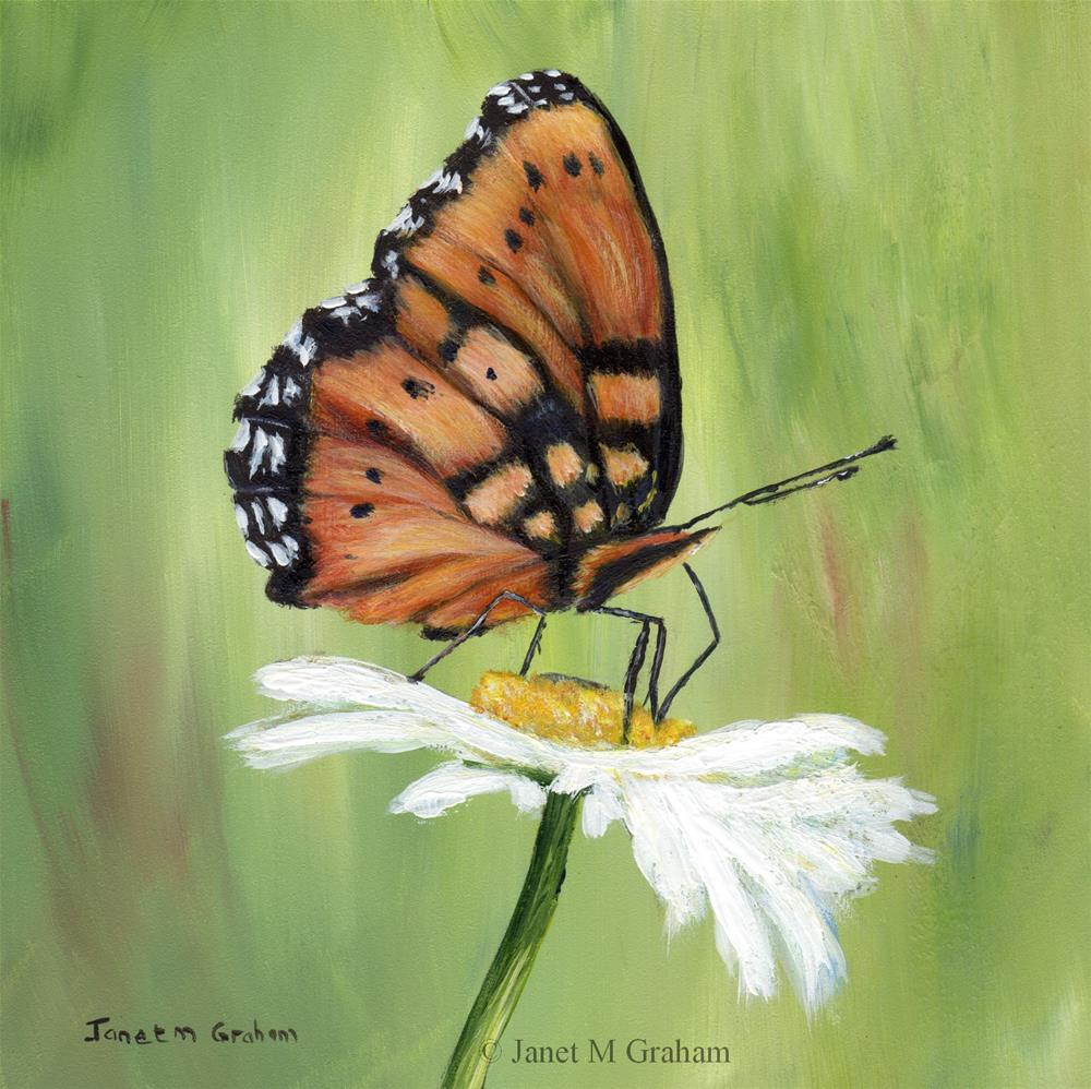 """Gaudy Commodore Butterfly"" original fine art by Janet Graham"
