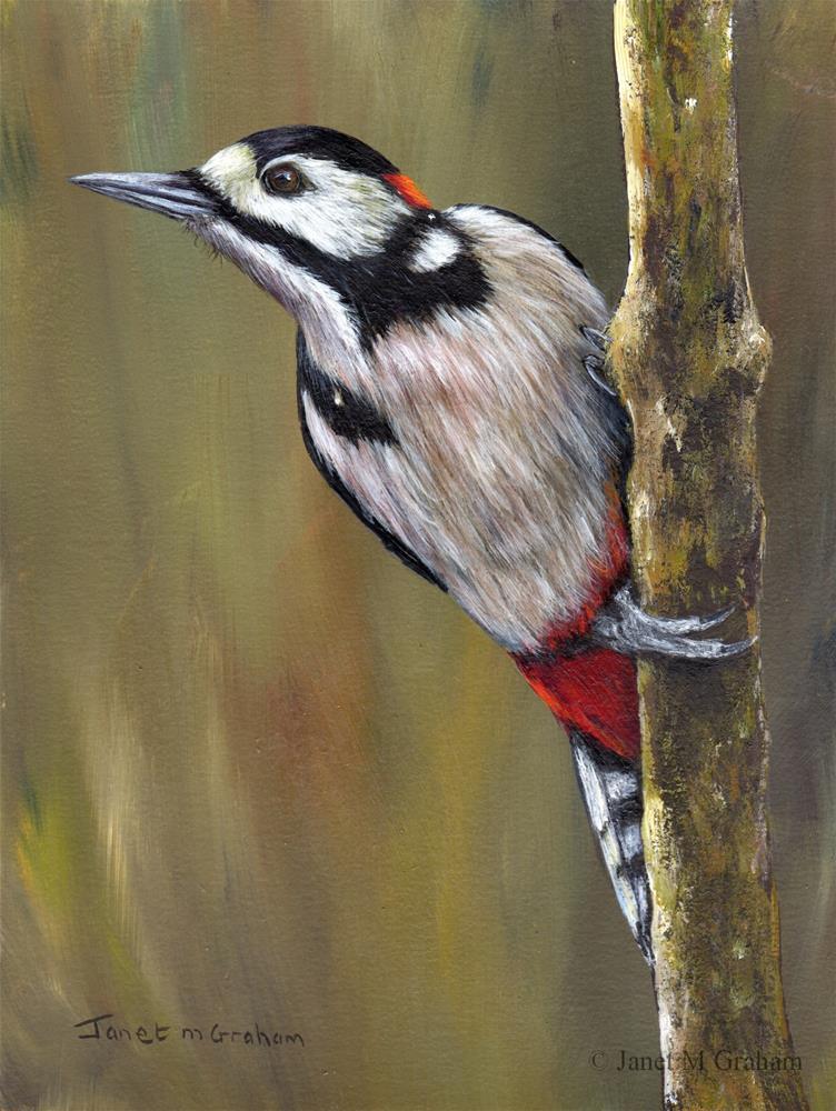 """Great Spotted Woodpecker"" original fine art by Janet Graham"