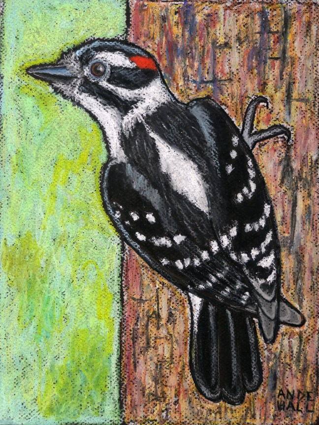 """Downy Woodpecker"" original fine art by Ande Hall"