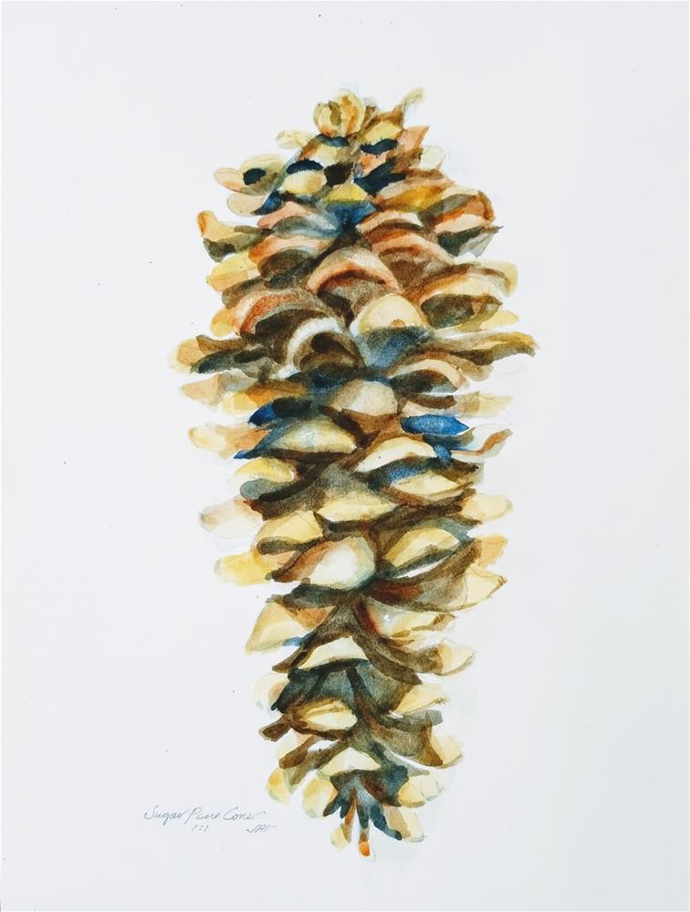 """Sugar Pine Cone"" original fine art by Jean Krueger"