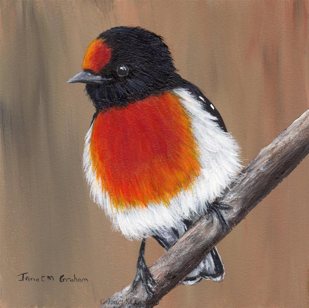 """Red Capped Robin No 2"" original fine art by Janet Graham"