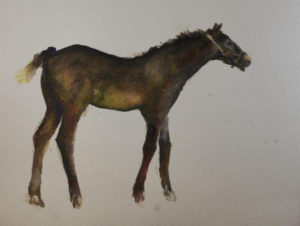 """Kentucky Foal #4"" original fine art by Sue Churchgrant"
