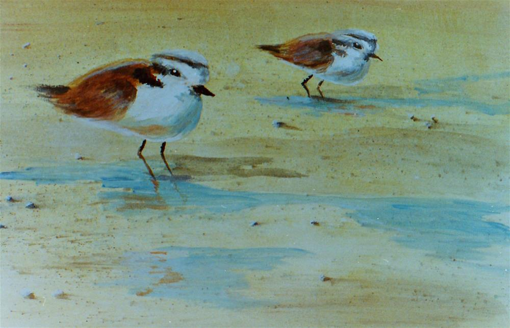 """Plovers"" original fine art by Susan Duda"