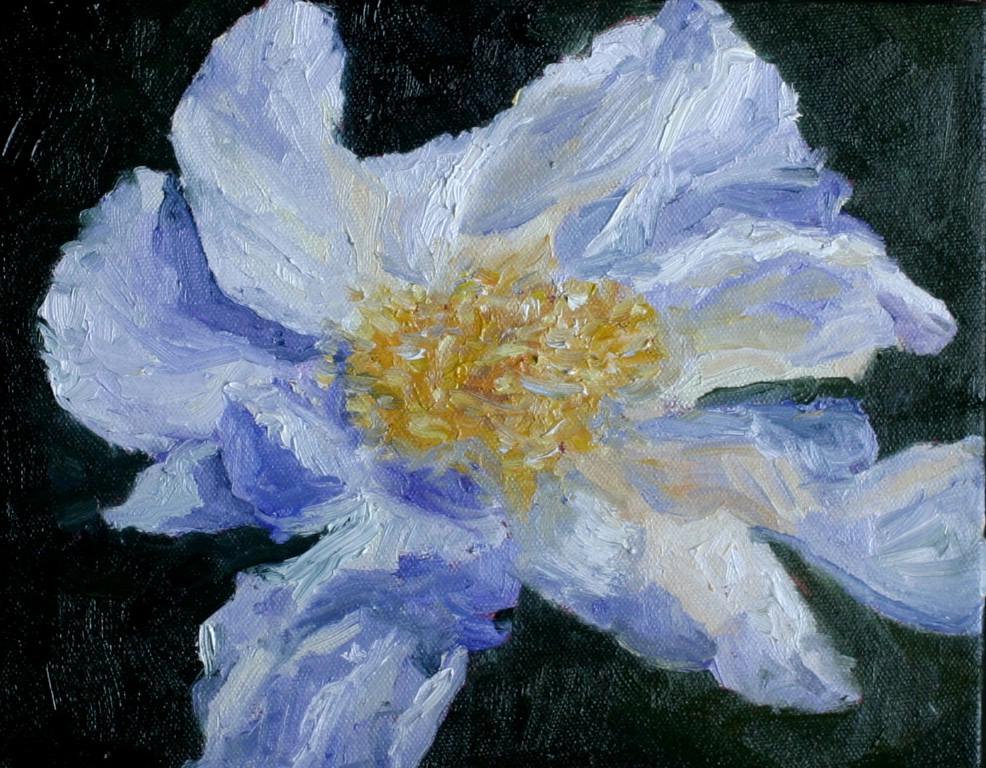"""""""White Poppy"""" original fine art by Kristen Dukat"""