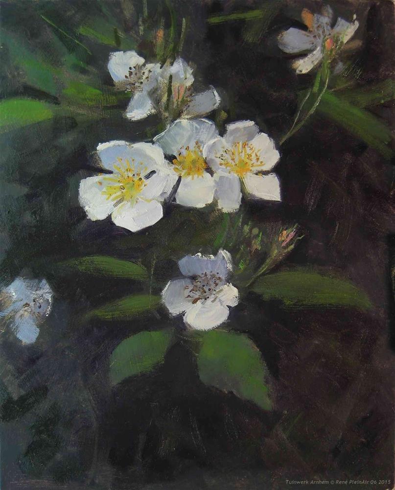 """Roses. Arnhem, The Netherlands"" original fine art by René PleinAir"