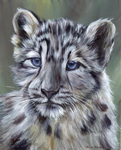 """""""Snow Leopard Cub"""" original fine art by Janet Graham"""