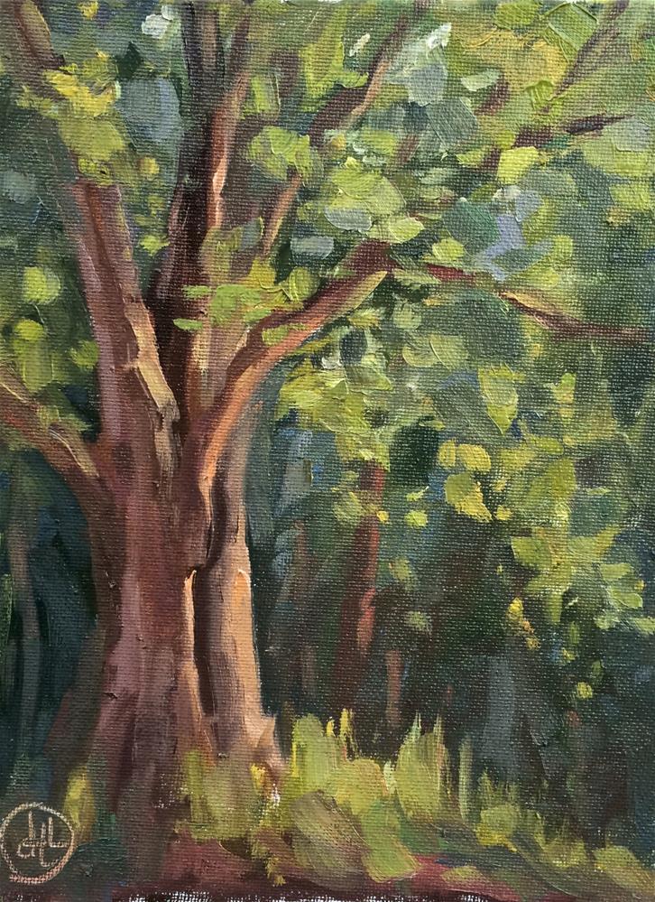 """""""oak in late light"""" original fine art by Dottie  T  Leatherwood"""