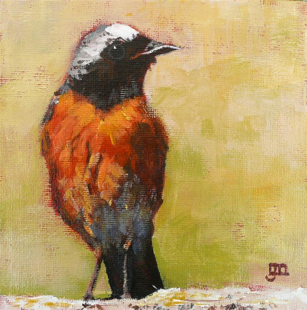 """""""Robin"""" original fine art by Leanne Owen"""