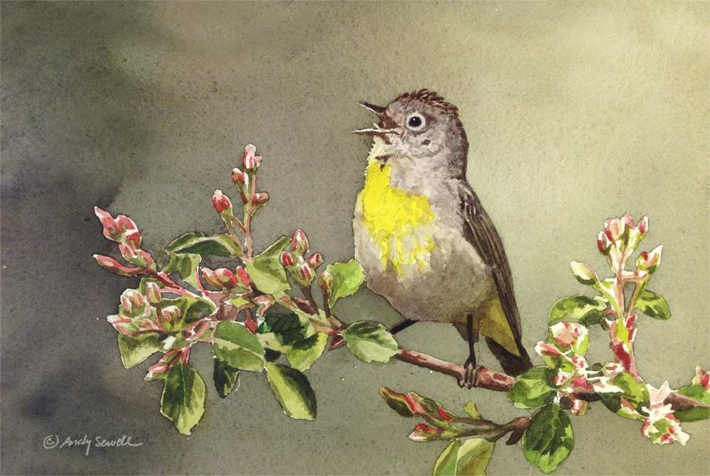 """""""V is for Virginia Warbler"""" original fine art by Andy Sewell"""