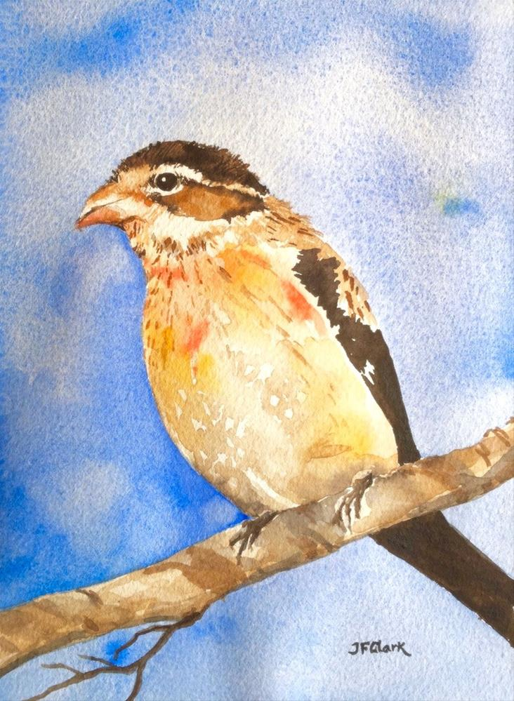 """Young Rose-Breasted Grosbeak"" original fine art by Judith Freeman Clark"