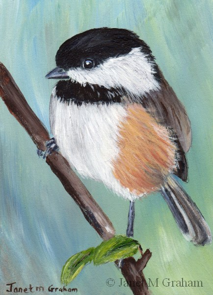 """Black Capped Chickadee ACEO"" original fine art by Janet Graham"