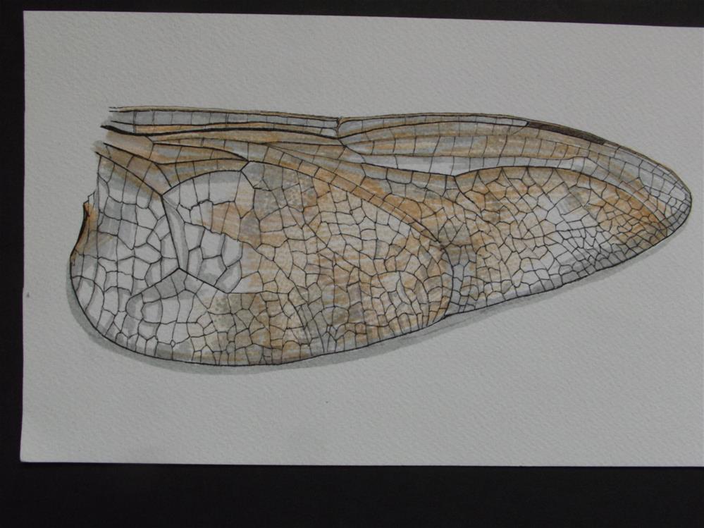 """Cicada"" original fine art by wanda sigafus"