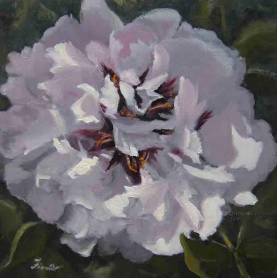 """""""Peony Passion"""" original fine art by Pat Fiorello"""