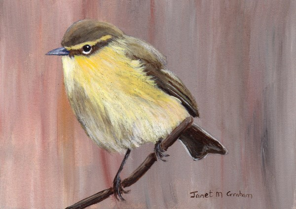 """""""Common Chiffchaff ACEO"""" original fine art by Janet Graham"""