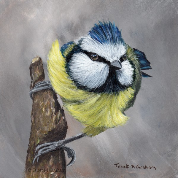 """Blue Tit No 9"" original fine art by Janet Graham"