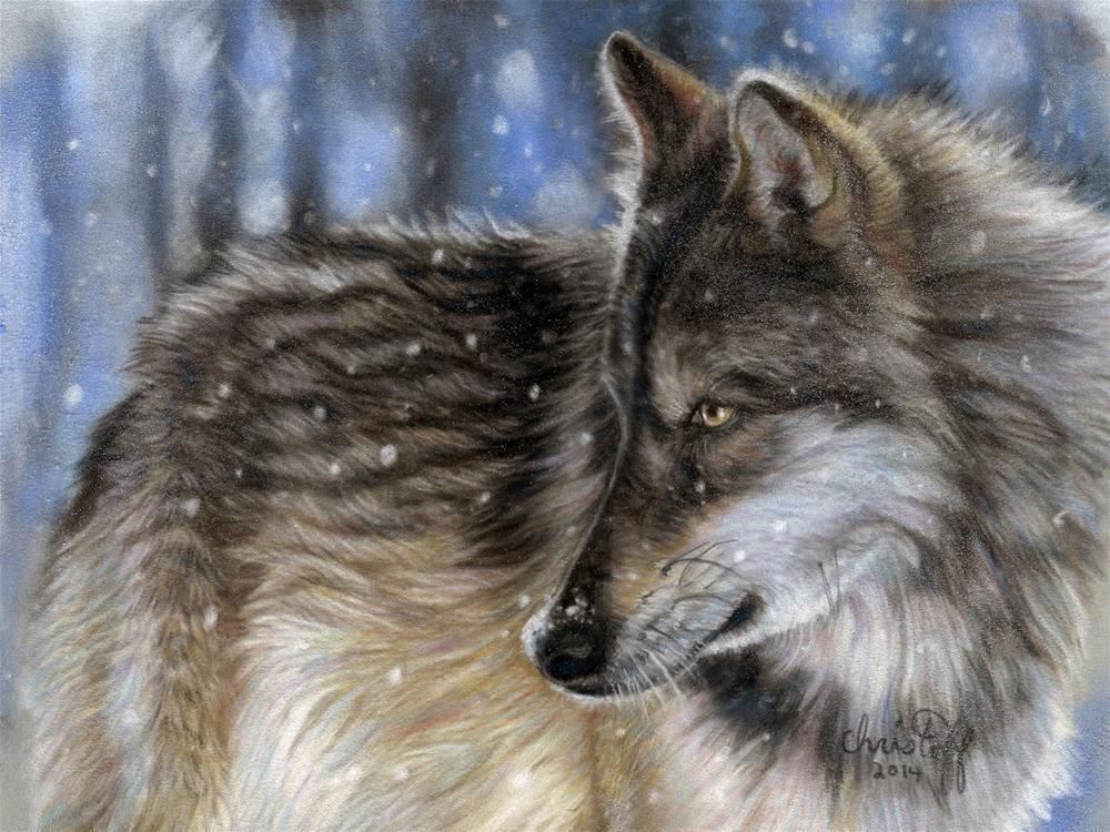 """Winter Wolf  12 x 16 pastel on velour paper, $480.00"" original fine art by emily Christoff-Flowers"
