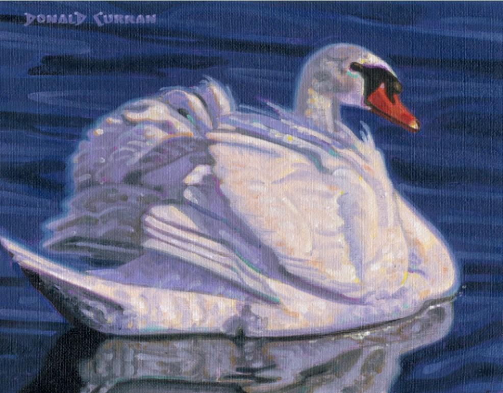 """Swan 1"" original fine art by Donald Curran"