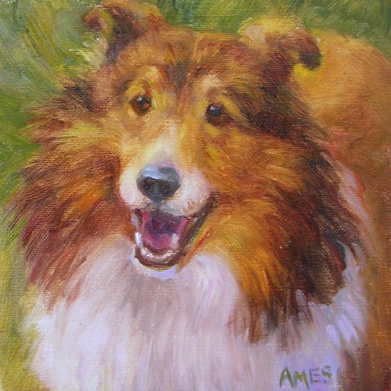 """""""Sheltie"""" original fine art by Debra Ames"""