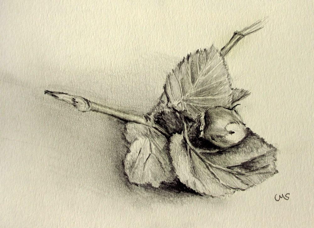 """""""Scottish Hazelnut"""" original fine art by Ulrike Miesen-Schuermann"""