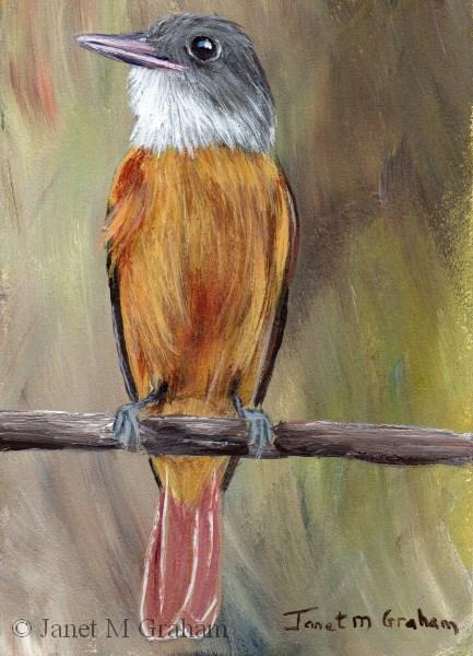 """Grey Hooded Attila ACEO"" original fine art by Janet Graham"