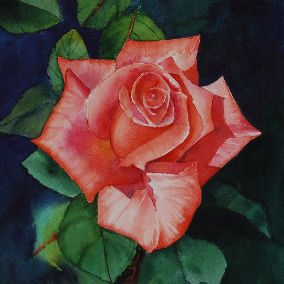 """""""Apricot Rose"""" original fine art by Mary Anderson"""