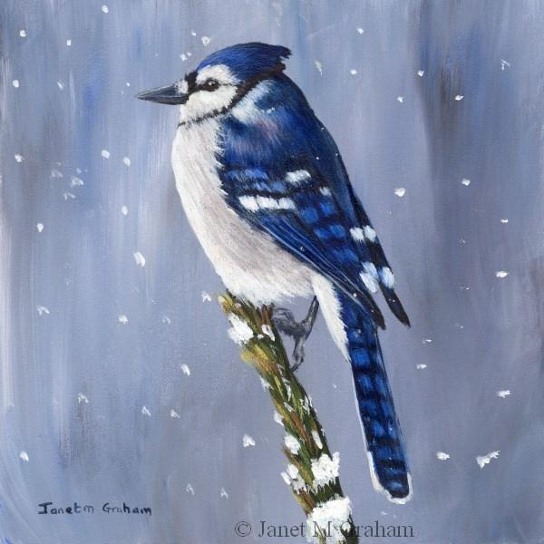 """Winter Blue Jay"" original fine art by Janet Graham"