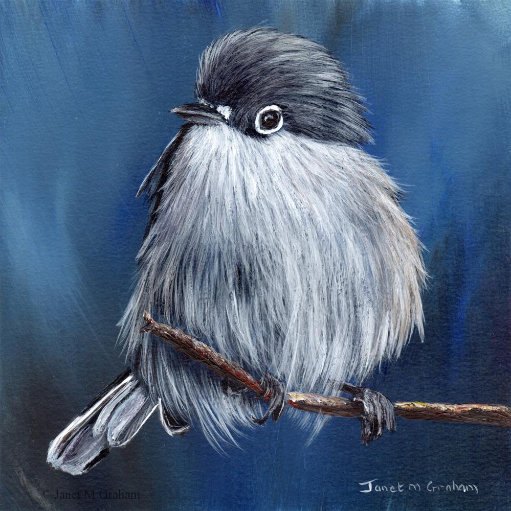 """Black Capped Gnatcatcher"" original fine art by Janet Graham"