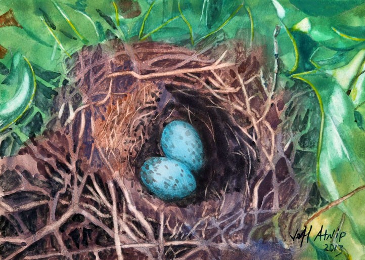 """Mockingbird Nest"" original fine art by Jeff Atnip"
