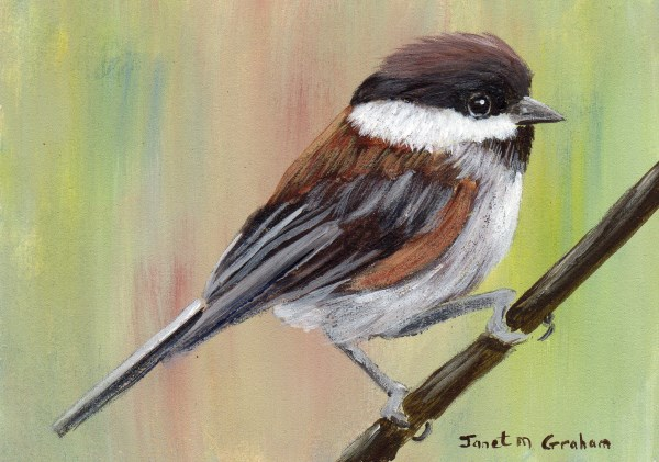 """Chestnut - Backed Chickadee ACEO"" original fine art by Janet Graham"