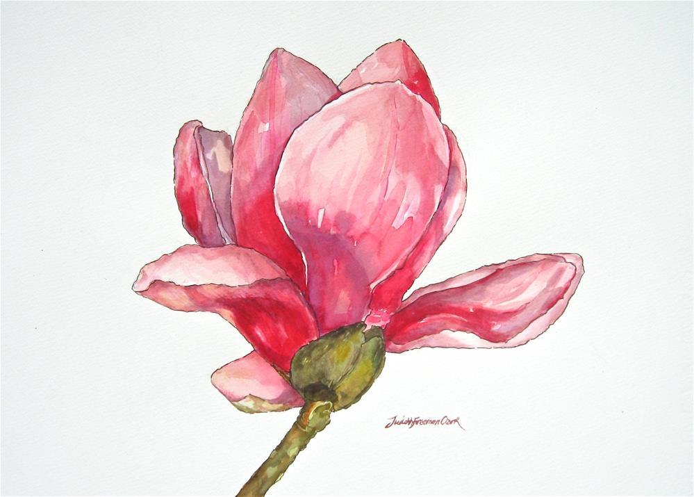 """Magnolia × soulangeana (saucer magnolia)"" original fine art by Judith Freeman Clark"