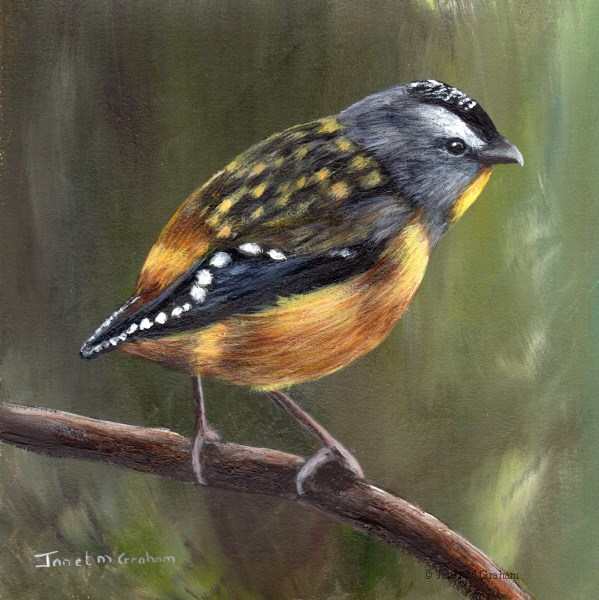 """""""Spotted Pardalote No 2"""" original fine art by Janet Graham"""