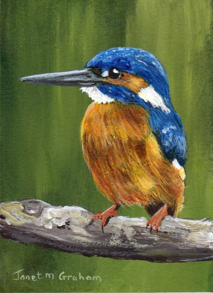 """""""Kingfisher ACEO"""" original fine art by Janet Graham"""